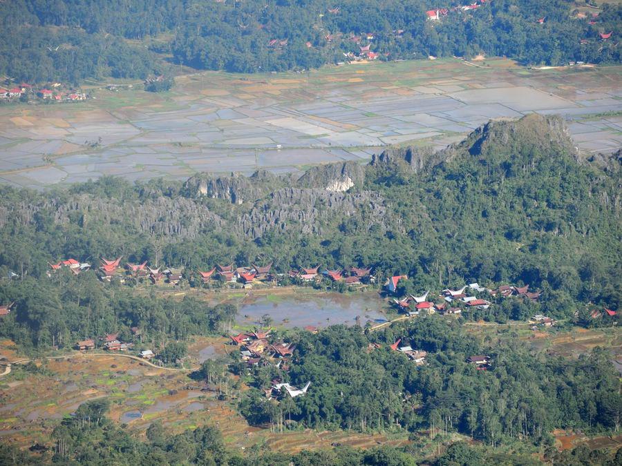 Вид с горы на рисовые поля