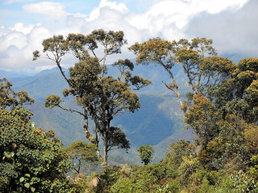 Долина за деревьями