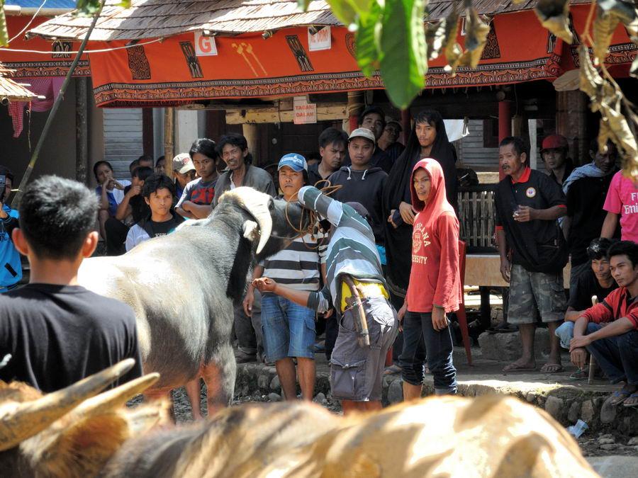 Жертвоприношение буйвола