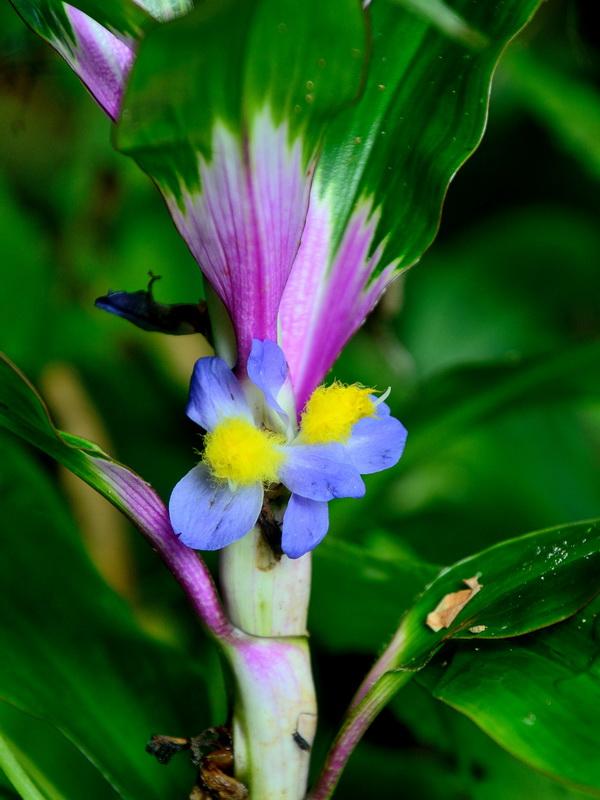 Цветы Национальный парк «Янтарная гора» (amber mountain national park) на Мадагаскаре Национальный парк «Янтарная гора» (Amber Mountain National Park) на Мадагаскаре DSC 5363
