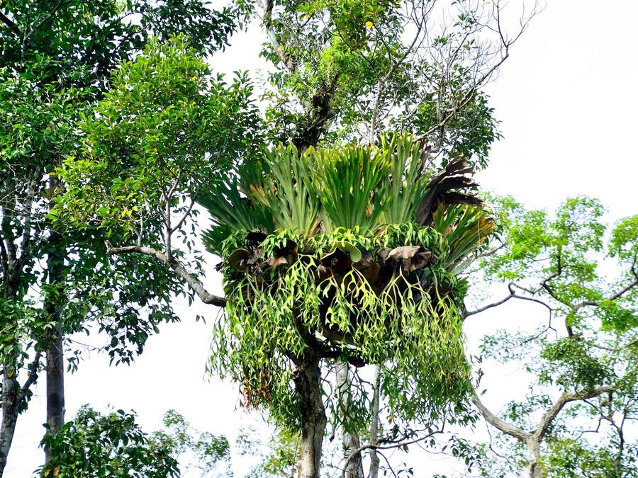 Красота Танджунг Путинг Национальный парк Танджунг Путинг (Tanjung Puting) в Индонезии DSC 1109