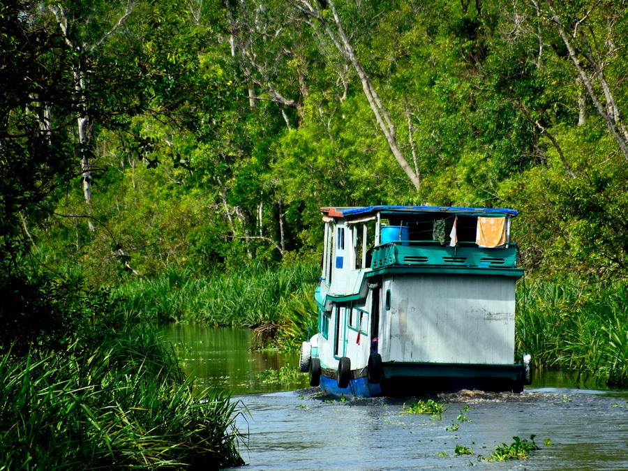 Клоток Танджунг Путинг Национальный парк Танджунг Путинг (Tanjung Puting) в Индонезии DSC 1231