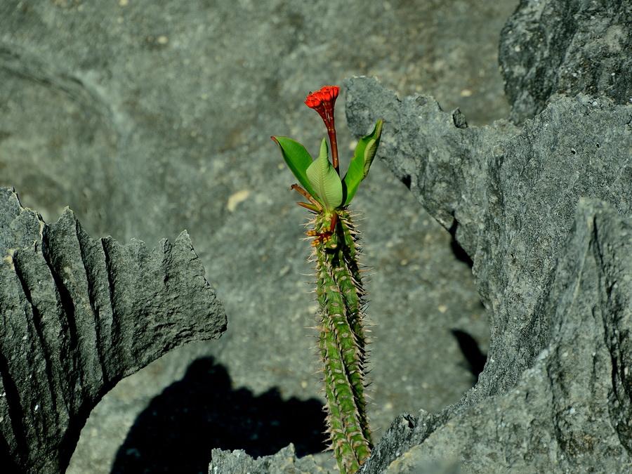 Цветок в скалах