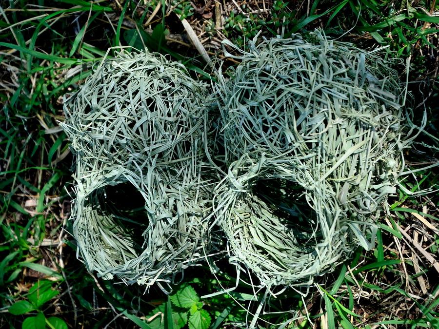 Гнёзда ткачей