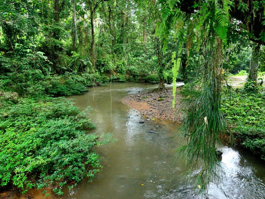 Река Тавау