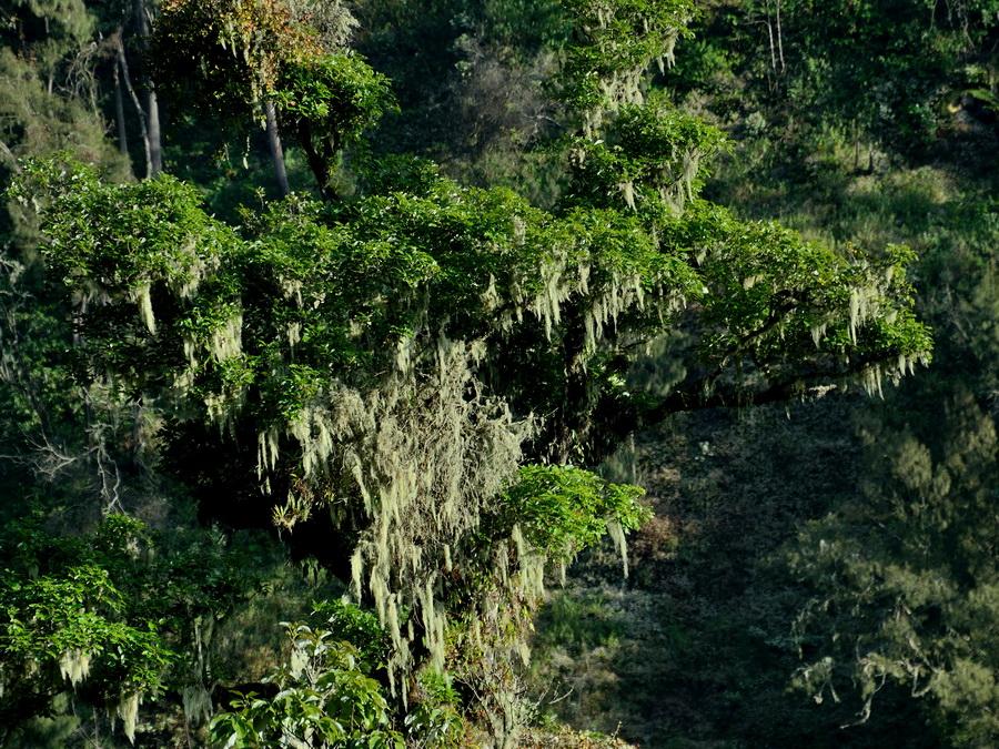 Лес на Яве
