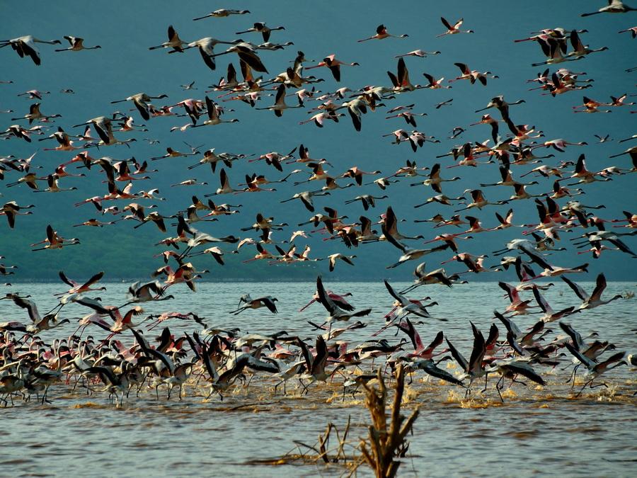 Полёт фламинго