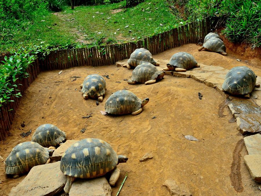 Лучистые черпахи