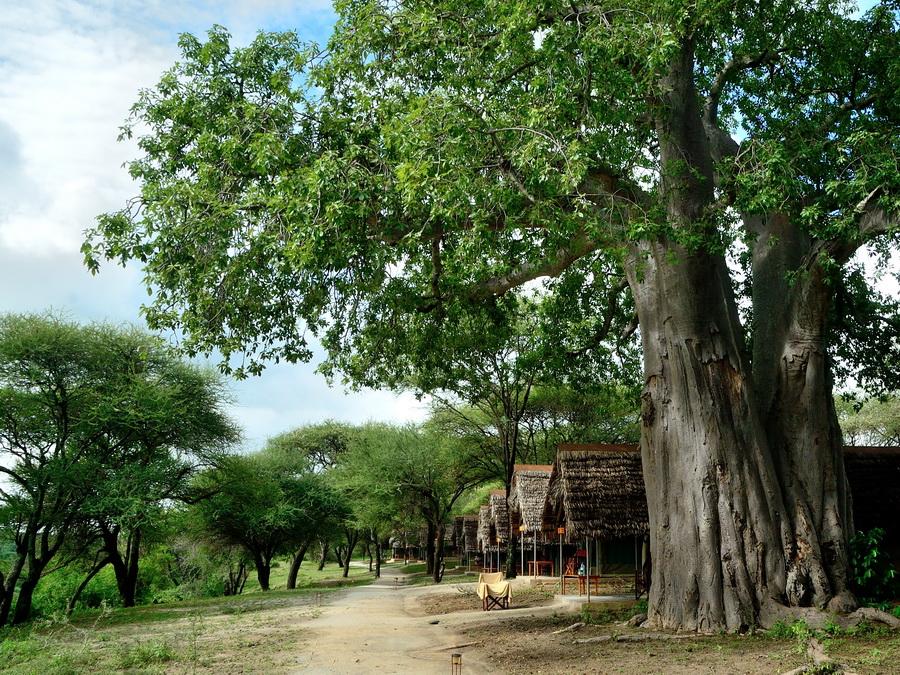 Лодж в Африке