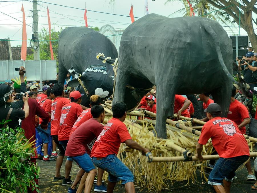 Сражение буйволов