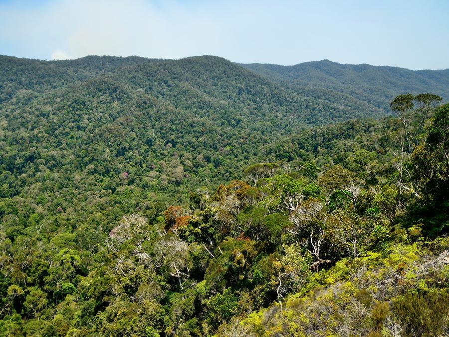 Лес на Мадагаскаре