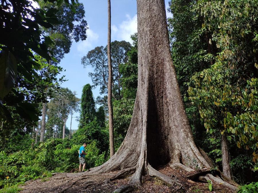 Лес на Борнео